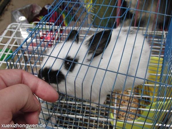 Kaninchen im Panda-Look