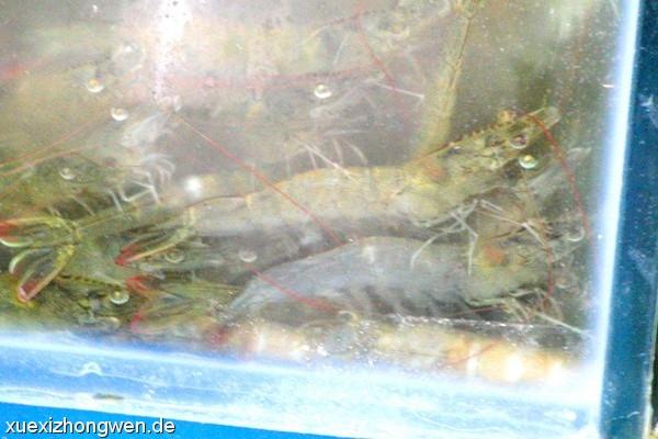 HIER sind aber jetzt lebende Jumbo-Shrimps