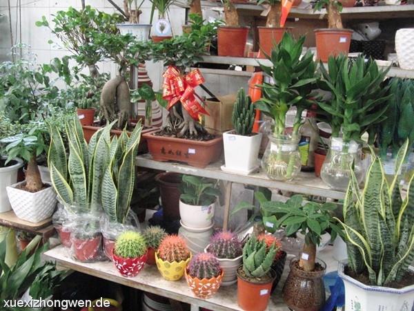 Pflanzen Blumen und Palmen