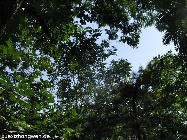 Blick durch die Tuanjienhu Bäume in den Himmel von Beijing (2011)