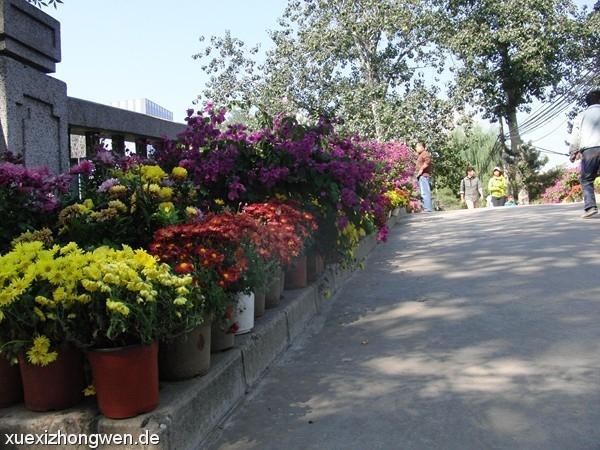 Bunte Blumen auf Brücke