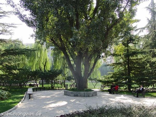 Grüne Oase Tuanjiehu-Park